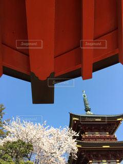 三重塔  桜  お不動様  つくばみらい市  古刹の写真・画像素材[483862]