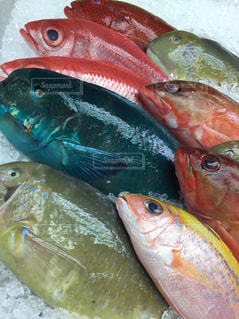 沖縄の魚の写真の写真・画像素材[1729407]