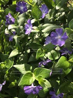 花の写真・画像素材[483846]