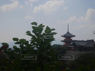 清水寺の写真・画像素材[692005]