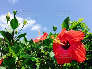 夏の写真・画像素材[488758]