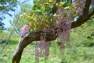 花の写真・画像素材[484065]