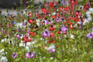 花の写真・画像素材[484079]