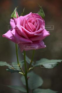 花の写真・画像素材[484084]