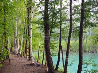青い池の写真・画像素材[3332961]