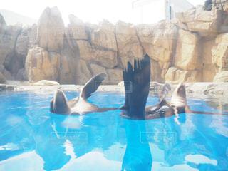 水族館の写真・画像素材[484511]