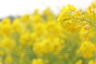 風景 - No.484559