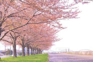 風景 - No.484592
