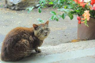 猫 - No.642749
