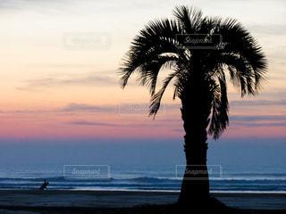 朝焼けのビーチのヤシの木の写真・画像素材[964558]
