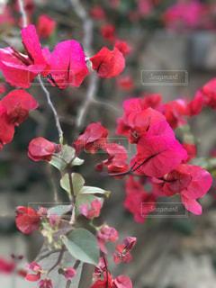 花の写真・画像素材[506735]