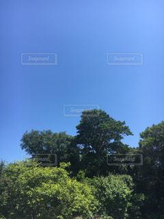空の写真・画像素材[486933]