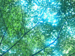 緑の写真・画像素材[486107]