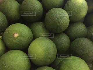 緑の写真・画像素材[548457]