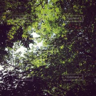 空の写真・画像素材[548504]