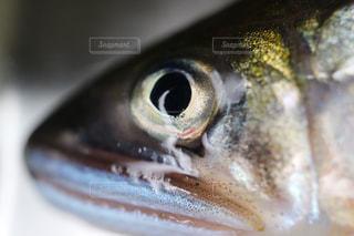 No.489136 魚