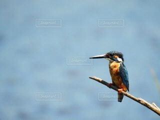 枝に止まっている小鳥の写真・画像素材[3722625]