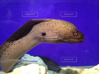 魚の写真・画像素材[489670]