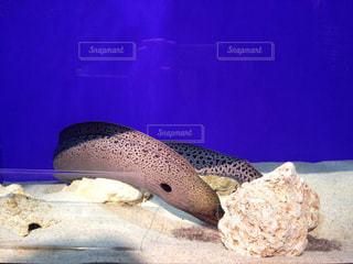 魚 - No.489671