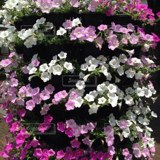 花の写真・画像素材[507202]