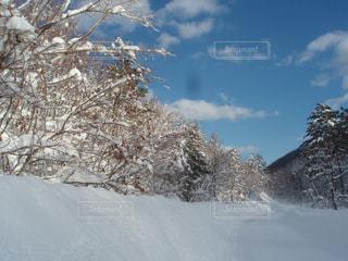 大雪の日の写真・画像素材[1790519]