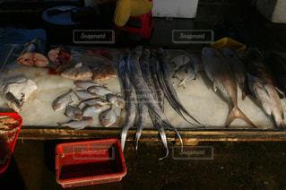 太刀魚の写真・画像素材[1816264]