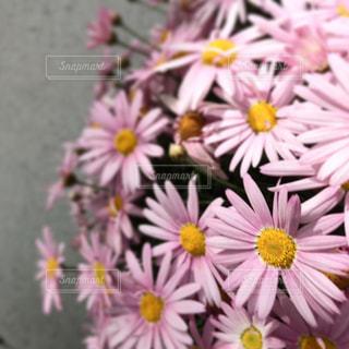 花の写真・画像素材[485961]