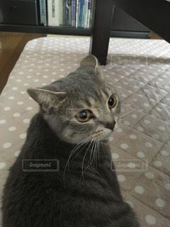 猫の写真・画像素材[488546]