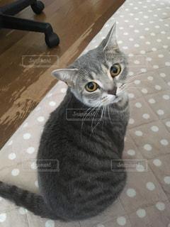 猫の写真・画像素材[488549]