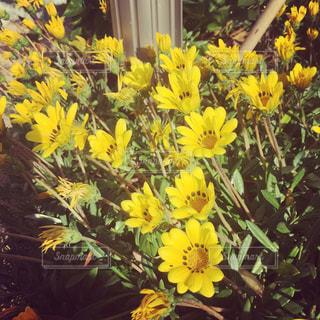 花の写真・画像素材[498599]