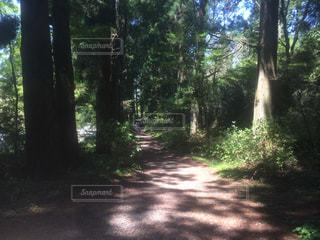 箱根の写真・画像素材[498609]