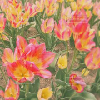 花の写真・画像素材[486331]