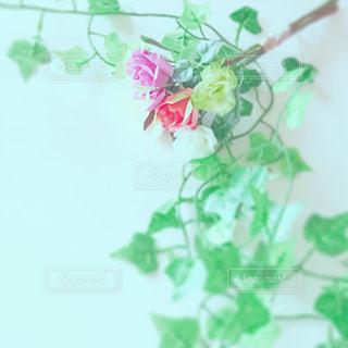 花の写真・画像素材[513592]