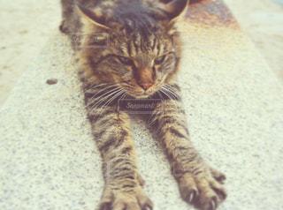 猫の写真・画像素材[513607]