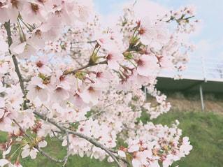 花の写真・画像素材[523147]