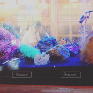 水槽の中の魚と小人の写真・画像素材[746799]