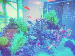 スイミング プールの水中ビューの写真・画像素材[932320]