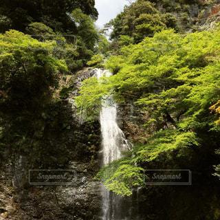 自然の写真・画像素材[486390]