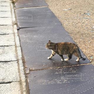 猫の写真・画像素材[487015]