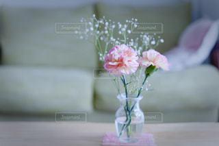 花の写真・画像素材[504335]