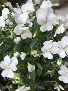 花の写真・画像素材[486441]