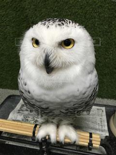動物の写真・画像素材[486447]