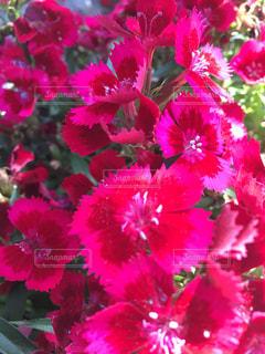 花の写真・画像素材[486536]
