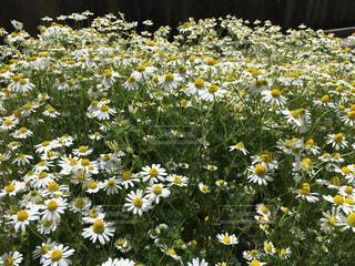 花の写真・画像素材[488662]
