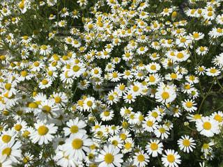 花の写真・画像素材[488664]