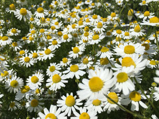 花の写真・画像素材[488665]