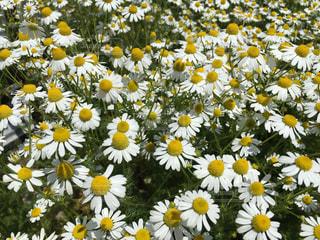 花の写真・画像素材[488668]