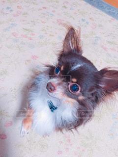 犬の写真・画像素材[486889]