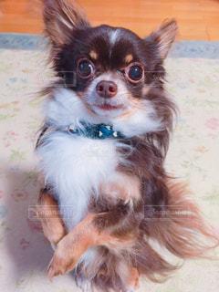 犬の写真・画像素材[486892]
