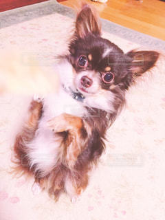 犬の写真・画像素材[486893]